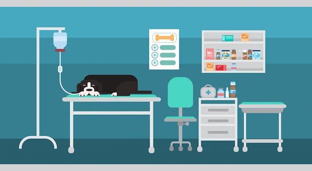 Dog in vet clinic of veterinary assistance medical hospital interior