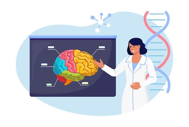 Dokter die op medisch demonstratiebord met menselijk brein wijst, legt zijn kansen uit. arts of wetenschapper die lesgeeft over alzheimer, symptomen van dementie, geestesziekte cognitieve wetenschap