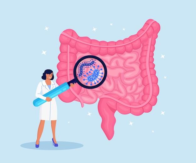 Dokter onderzoekt maagdarmkanaal, darmen, spijsverteringsstelsel met vergrootglas. darmontsteking, enteritis, colitis, dysbacteriose. darm gezondheid. darmmicro-organismen en vriendelijke flora