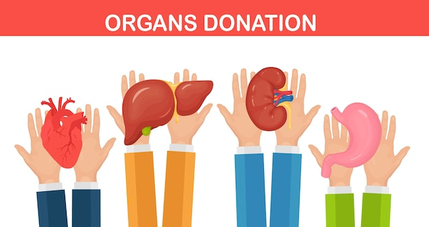 Donatie-organen. artsenhanden houden donornier, hart, lever, maag vast voor transplantatie