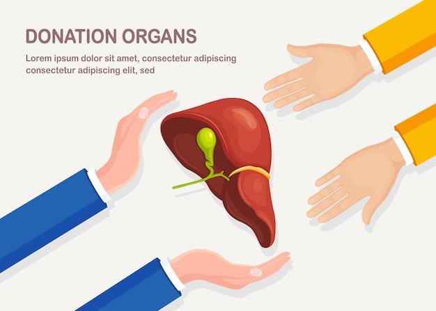 Donatie-organen. menselijke lever in de hand van de arts. anatomie van inwendige organen, geneeskunde. vrijwillige hulp.