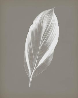 Dracaena recina, sappige tropische blad vintage, remix van originele kunstwerken van benjamin fawcett.