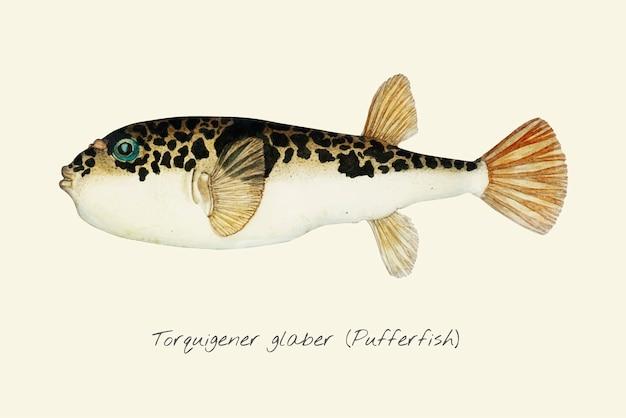 Drawig van een pufferfish