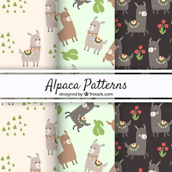 Drie alpacapatronen