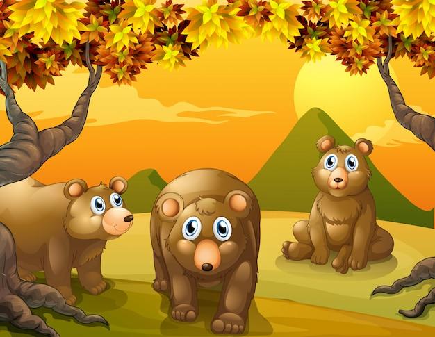 Drie bruine beren