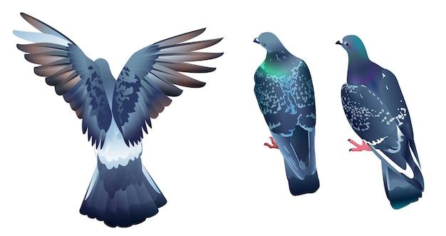 Drie duiven zitten met hun rug naar kijker. vogelduif stijgt op.