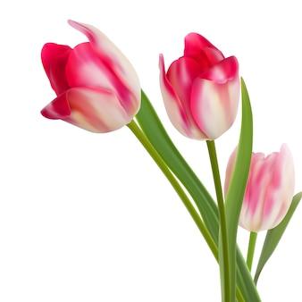 Drie fijne bloemen op wit.