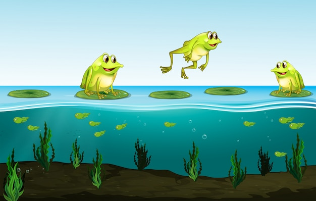 Drie groene kikkers op waterlelie