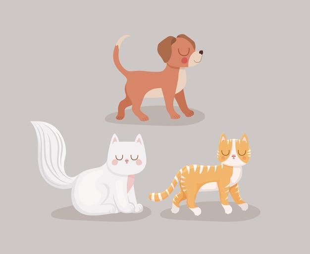 Drie huisdieren lachend