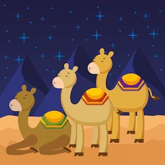 Drie kamelen tekenfilms.