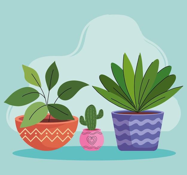 Drie kamerplanten in keramische potten