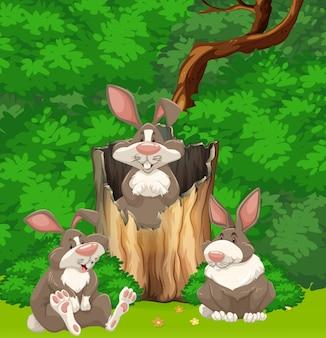 Drie konijnen in het bos