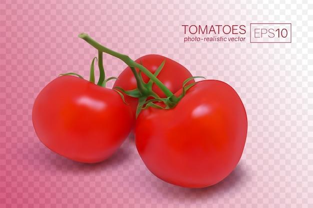 Drie rijpe rode tomaten op een tak. foto-realistische vectorillustratie op een transparante achtergrond. deze tomaten kunnen op elke achtergrond worden geplaatst.
