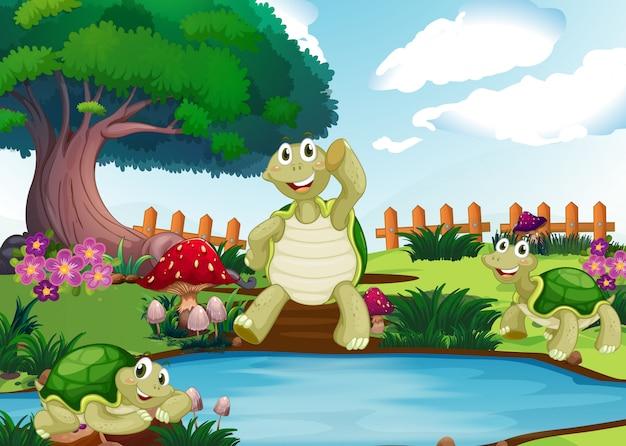 Drie schildpadden bij de vijver