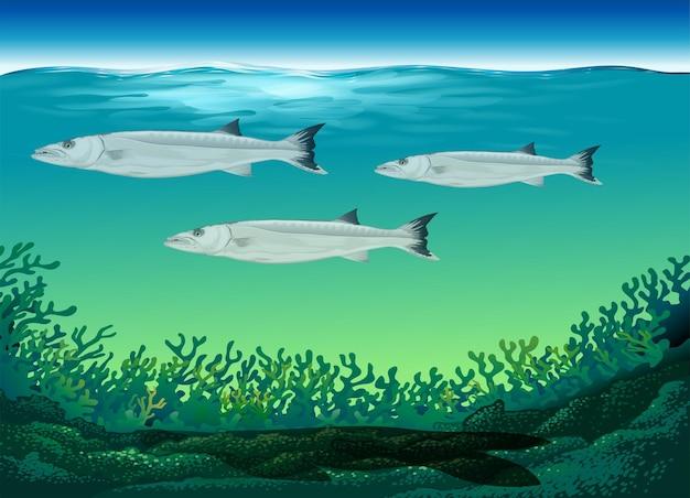 Drie vissen zwemmen onder de zee