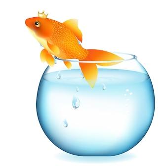 Dromende goudvis in aquarium, op wit wordt geïsoleerd