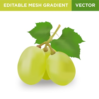 Druif fruit illustratie