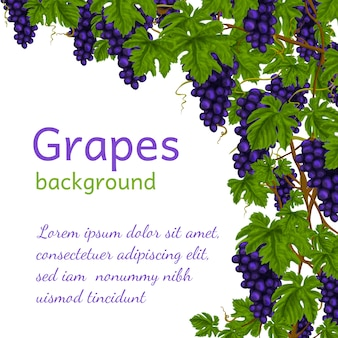 Druiven achtergrond sjabloon