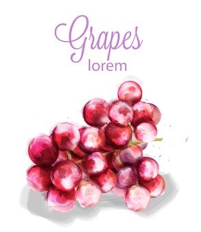 Druiven aquarel