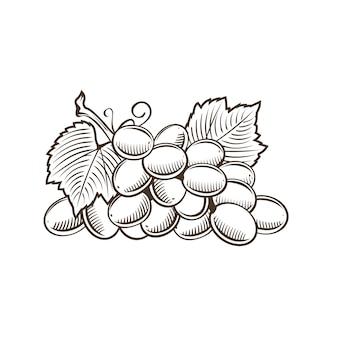 Druiven in vintage stijl. lijn kunst illustratie