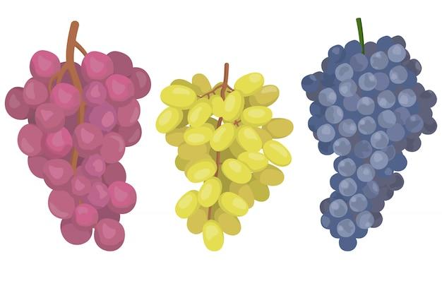 Druiven van verschillende variëteiten. bessen in cartoon stijl geïsoleerd op een witte achtergrond.