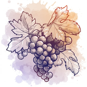 Druivencluster met bladeren. lineaire tekening geïsoleerd op aquarel textuur