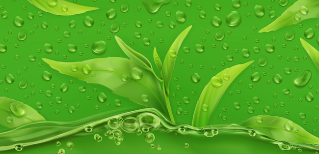 Druppel groene thee, realistische vector achtergrond