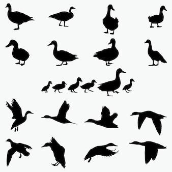Duck silhouetten