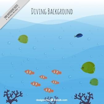 Duiken achtergrond met vissen en zeewier