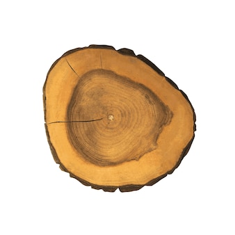 Dwarsdoorsnede van een boom