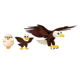 Eagle familie