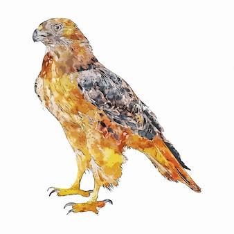 Eagle vogel dier aquarel schets hand getekende illustratie geïsoleerde witte achtergrond
