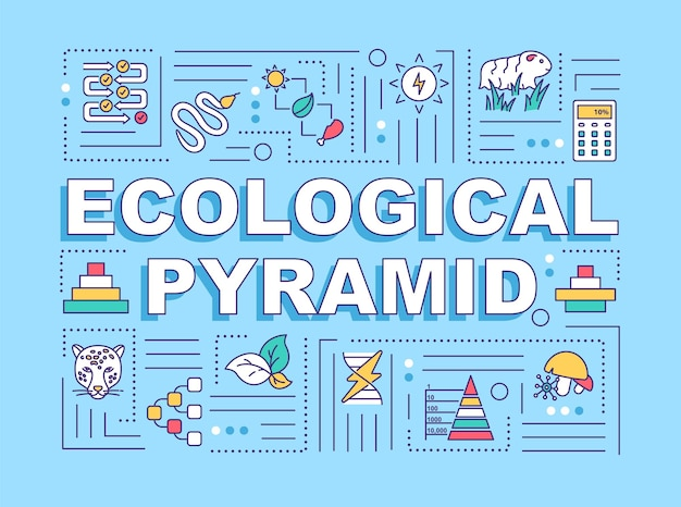 Ecologische piramide woord concepten banner. biodiversiteit, producenten en consumenten. infographics met lineaire pictogrammen op turkooizen achtergrond. geïsoleerde typografie. vector overzicht rgb-kleurenillustratie