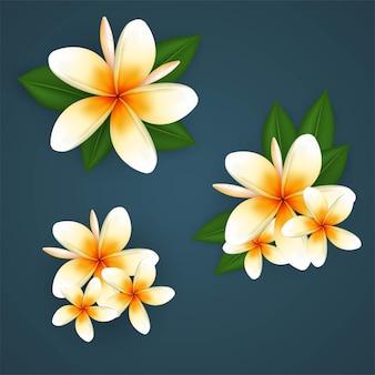 Ector tropische plant plumeria of frangipani bloemen gratis vector