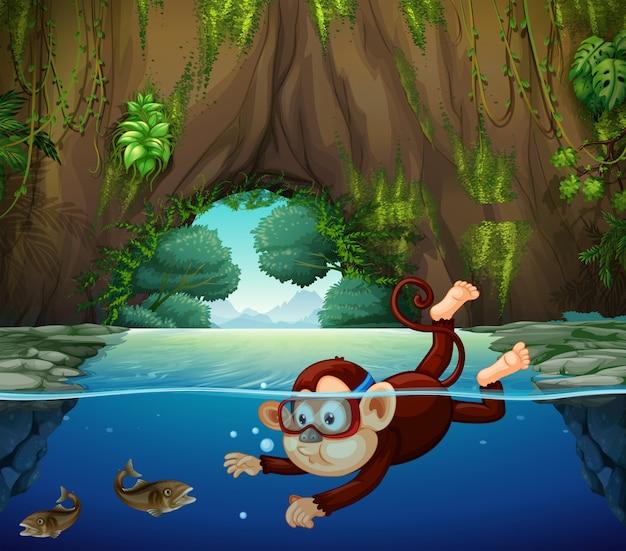 Een aap die in de rivier duikt