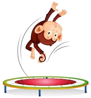 Een aap die op trampoline springt