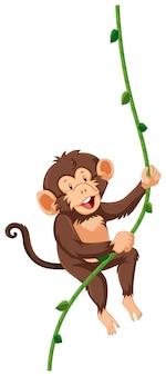Een aap die op wijnstok hangt