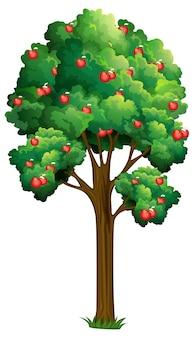 Een appelboom geïsoleerd op wit