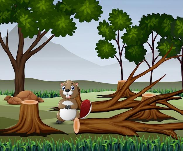 Een bever die in het dorre bos foerageert