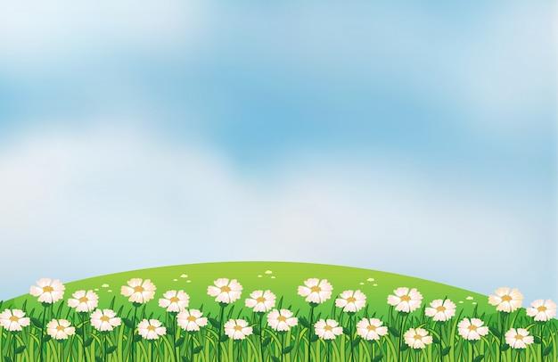 Een bloemenplantage op de top van de heuvels