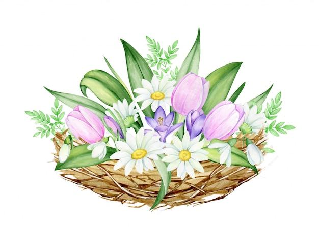 Een boeket bloemen, van madeliefjes, tulpen, sneeuwklokjes, krokussen in het nest. aquarel, lente illustraties, op een geïsoleerde achtergrond, voor de paasvakantie.