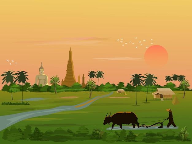 Een boer gebruikt buffels om de grond te scheppen in een rijstveld met een groot boeddhabeeld en de ochtendzon op de achtergrond.