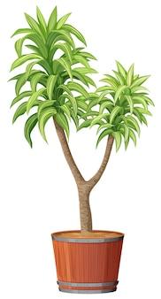 Een boom die in de pot plant