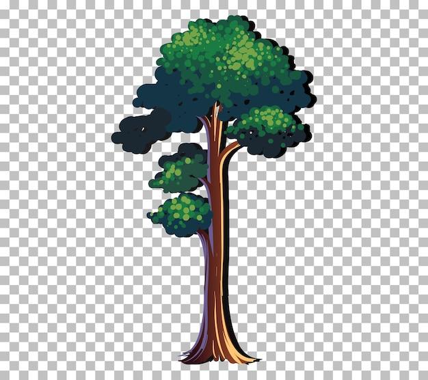 Een boom geïsoleerd op transparante achtergrond