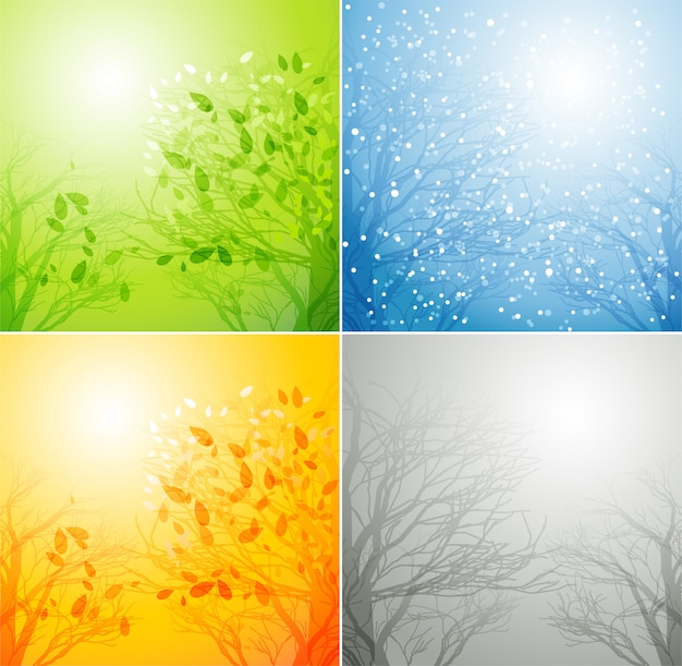 Een boom in vier verschillende seizoenen