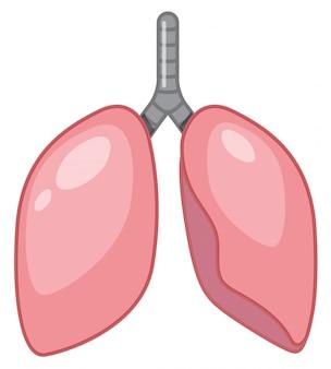 Een cartoon van menselijke longen