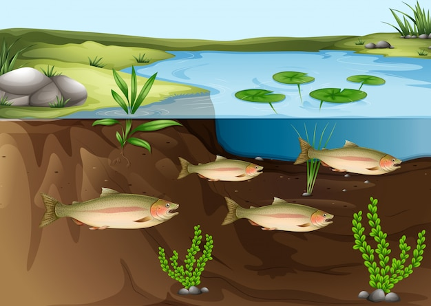 Een ecosysteem onder de vijver