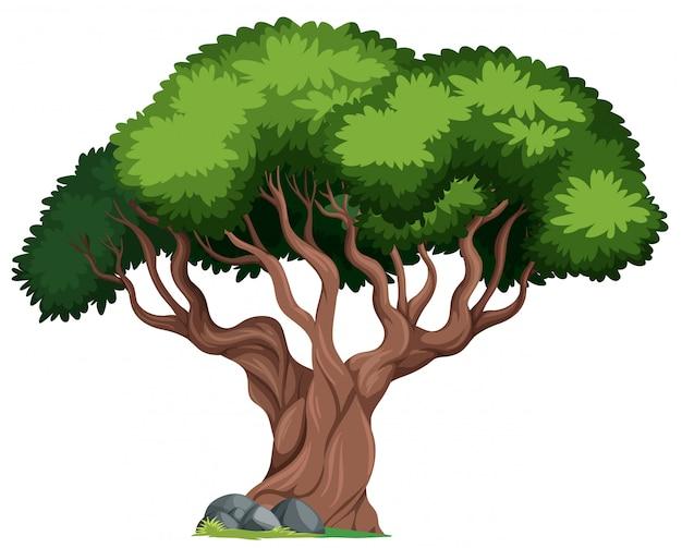 Een geïsoleerde boom op witte achtergrond