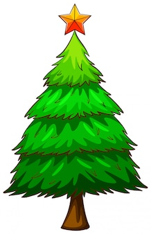Een gekleurde schets van een pijnboom