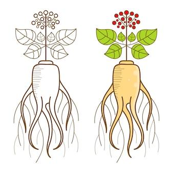 Een ginsengwortel en een deel van de plant.